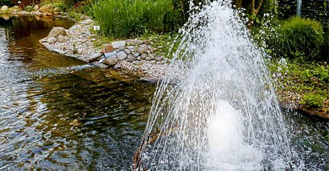 Water feature in Pond