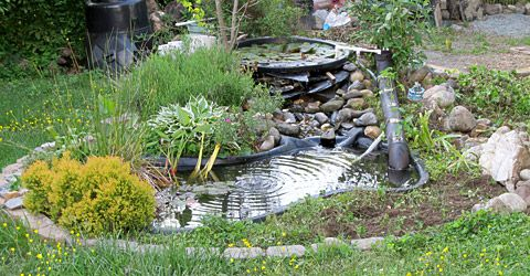 Small pond in back garden